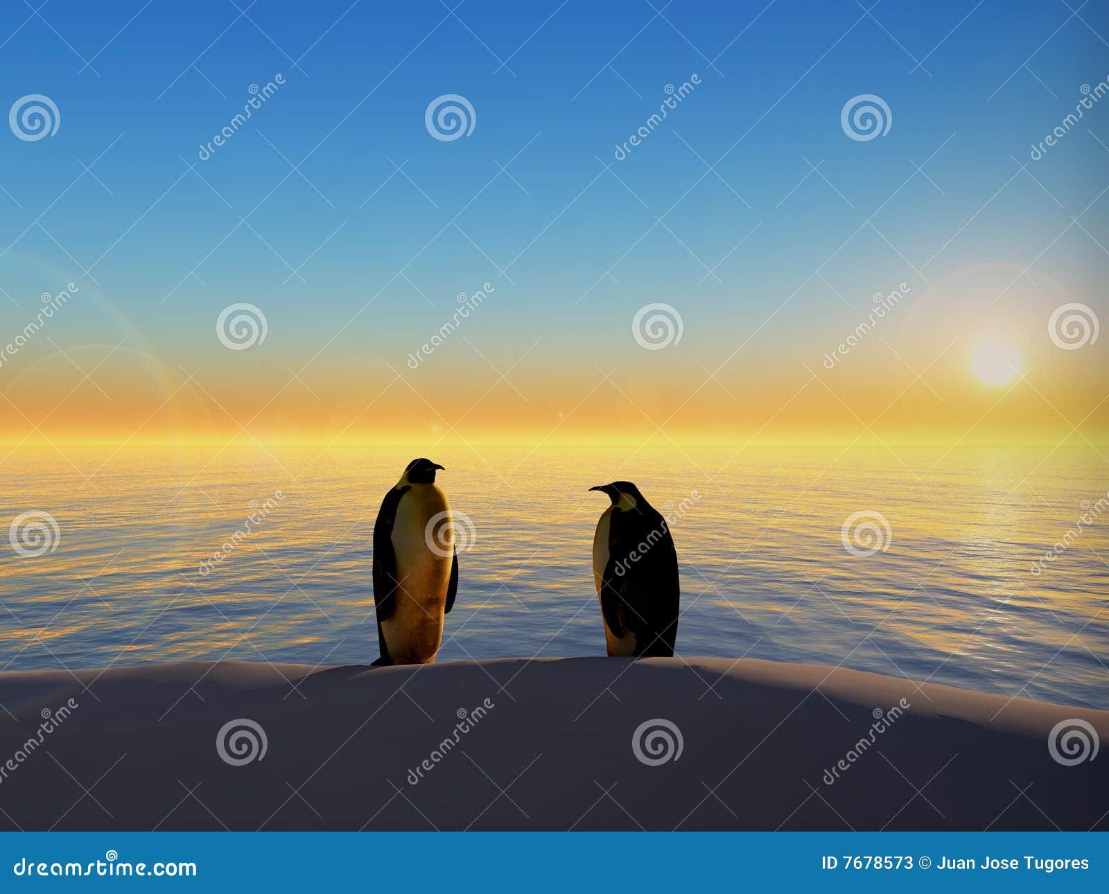 Pinguins pelo por do sol do oceano