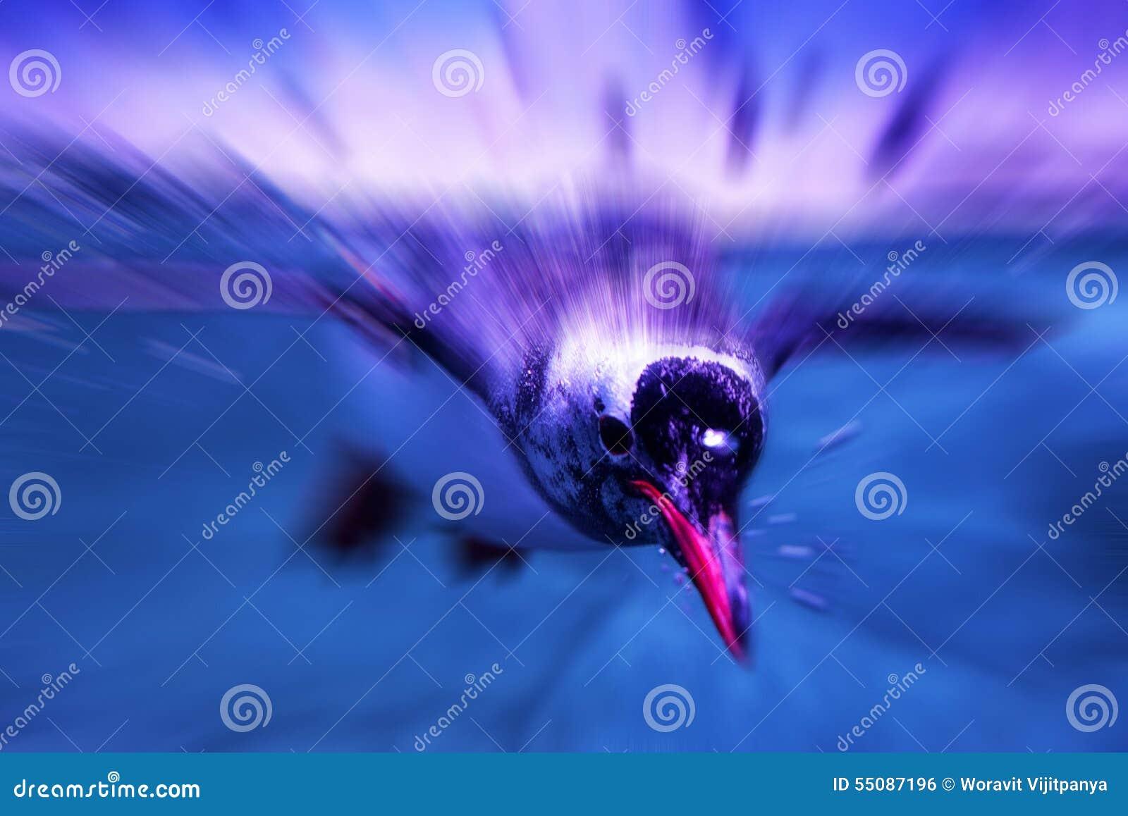 Pinguins que nadam