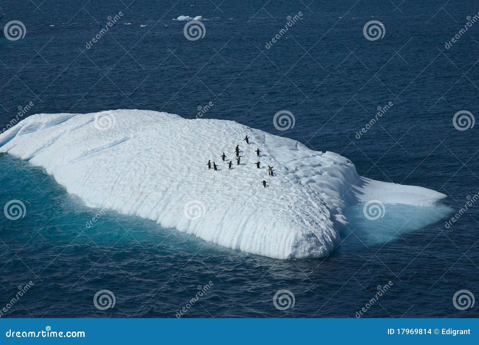 Pingvinlekplats