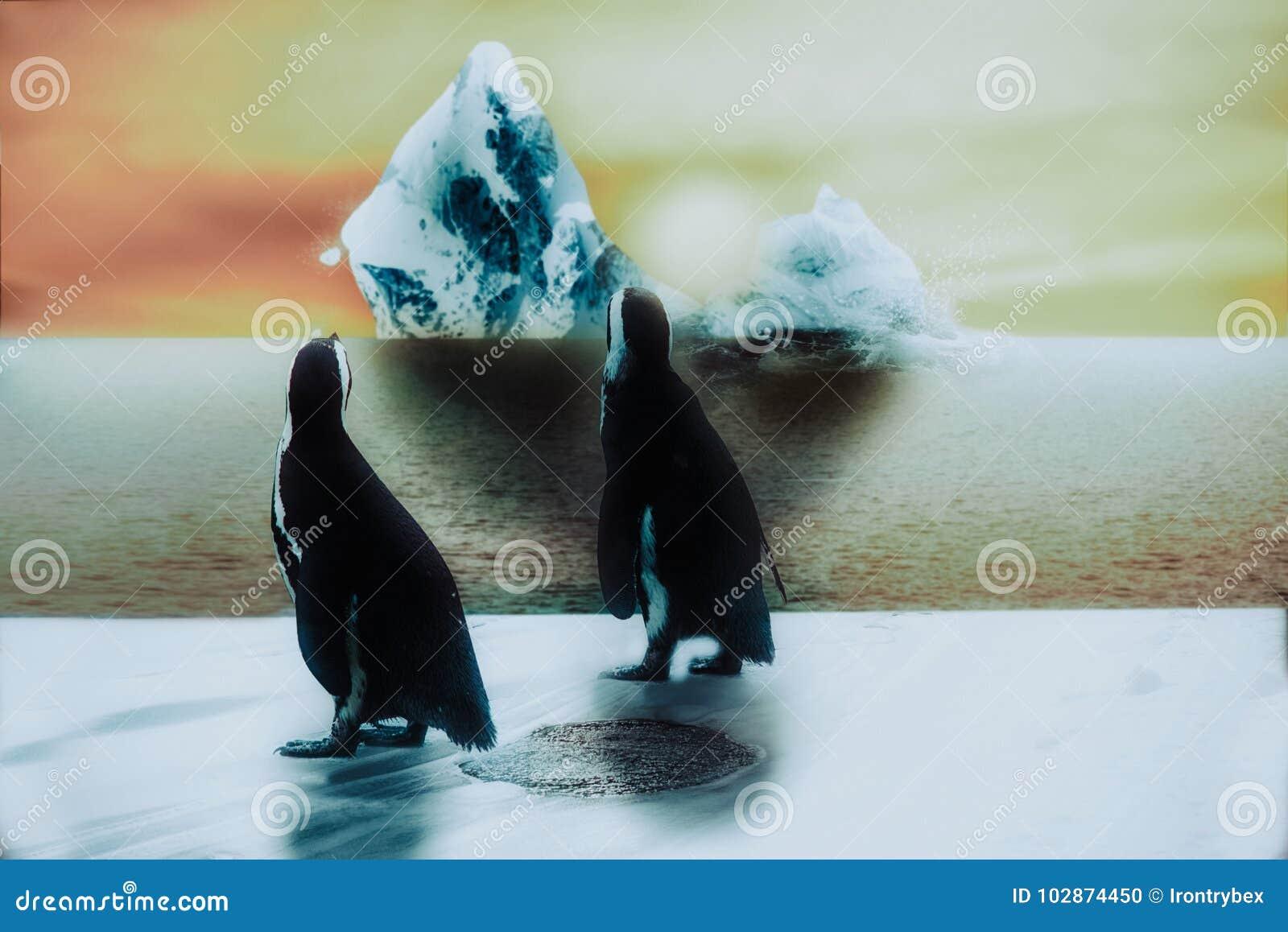 Pingwin w śniegu i lód, zmierzch z łupanie górą lodowa, globa