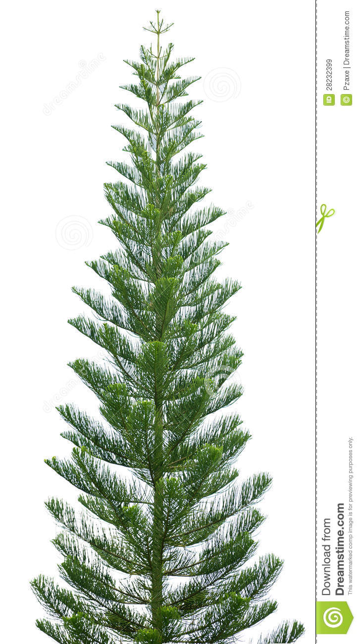 10 Slim Christmas Tree