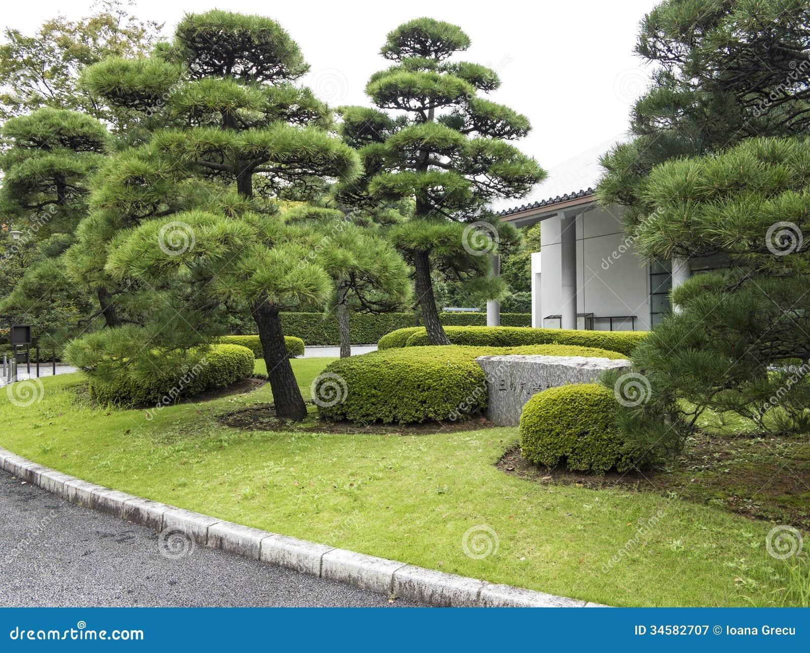 Pini In Giardino Giapponese. Libera Da Diritti