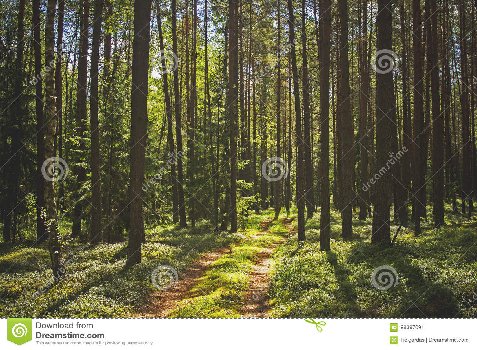 Pinjeskog och en bana