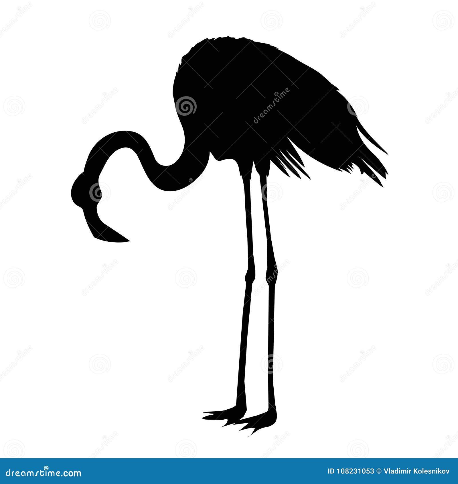 Pink African Beak Beauty Leg Wildlife Beach Cartoon