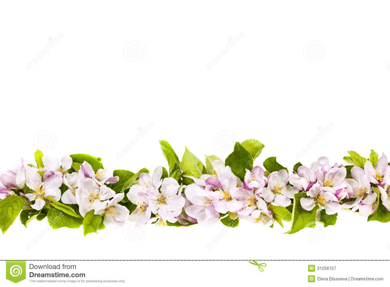 Apple Blossom Borders Photos Free Royalty Free Stock Photos From Dreamstime