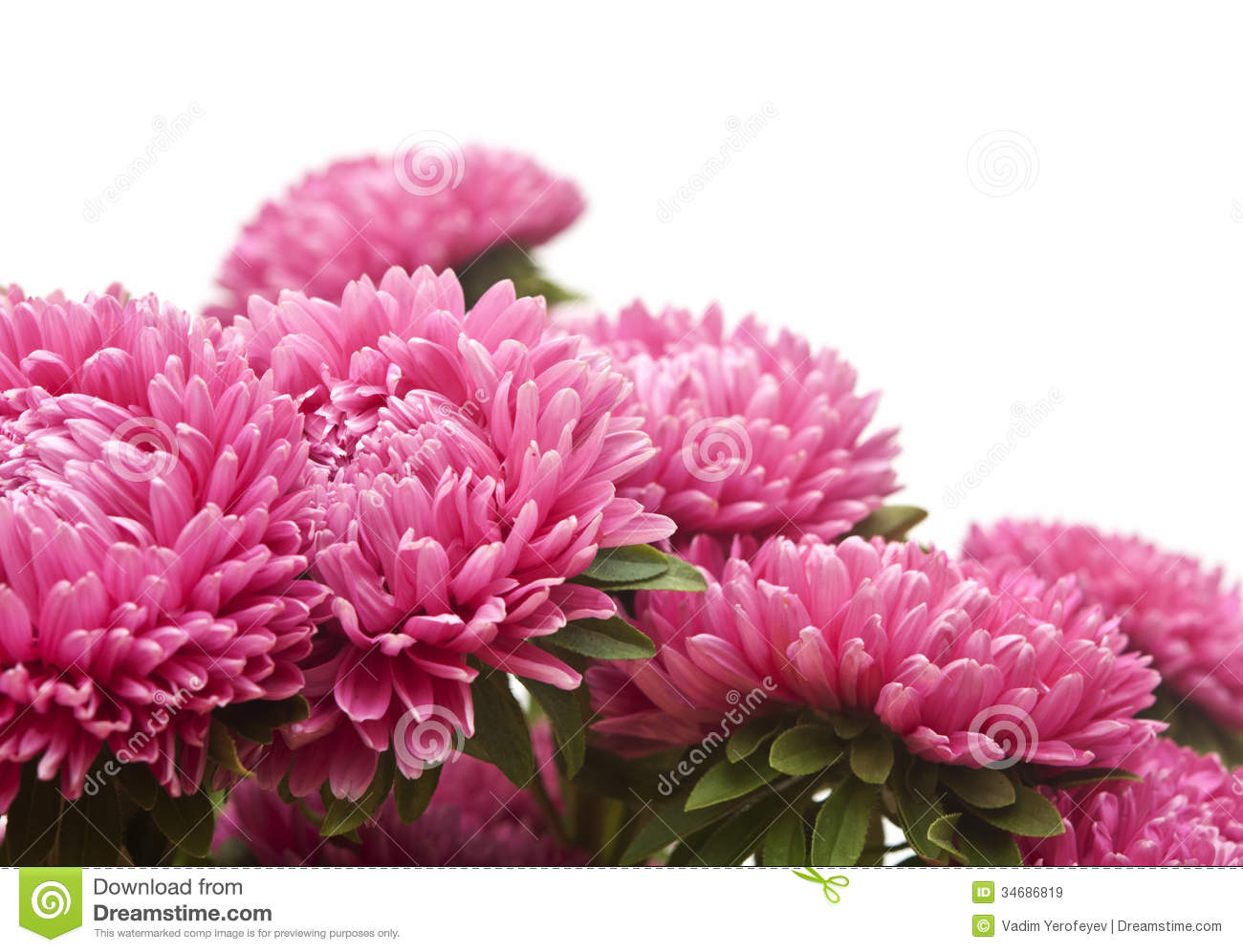 pink asters flowers bouquet royalty free stock images  image, Beautiful flower