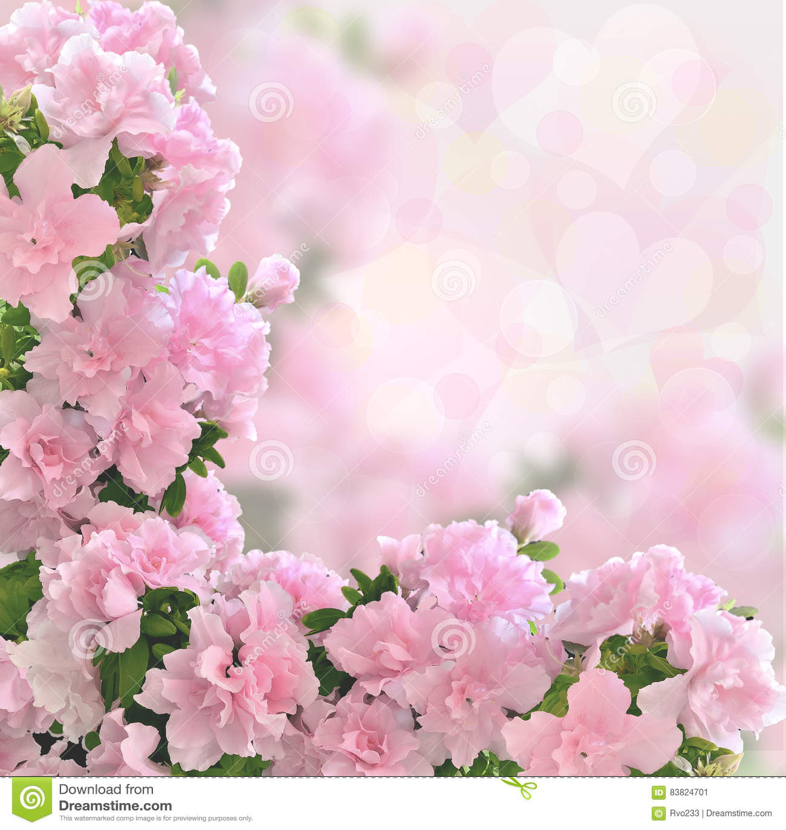 Bokeh Flowers Wedding: Pink Azalea Flowers Romantic Background Stock Image