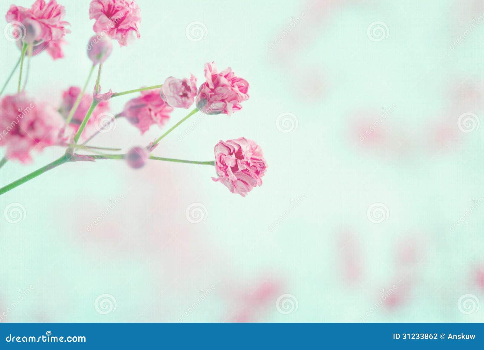 Pink Babys Breath Flowers Closeup Stock Photo 31233862 Megapixl
