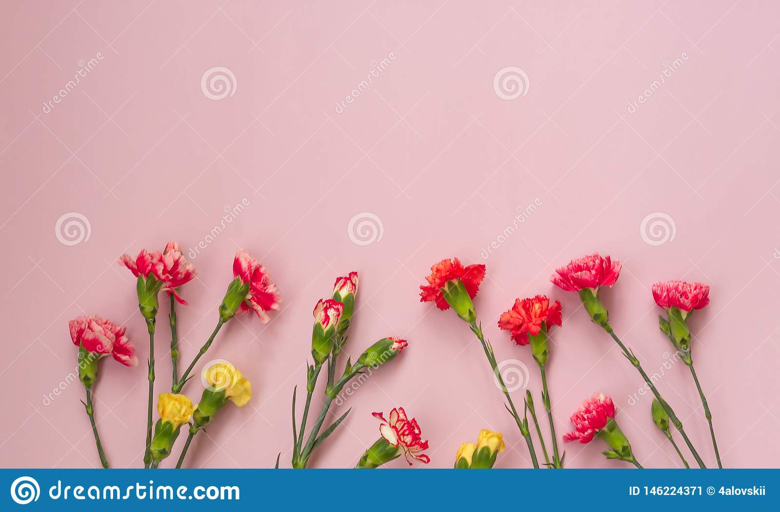 Pink background with carnations flowers and copy space. Top view