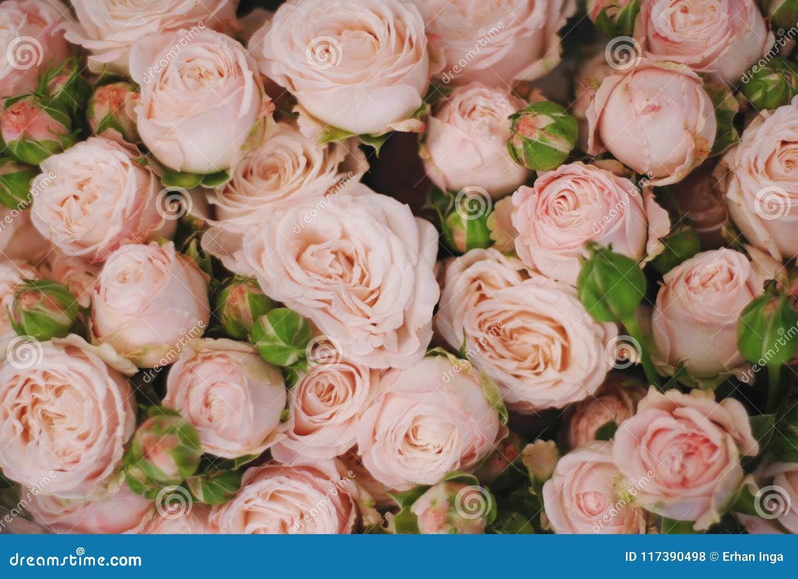 Цветы космические букеты букет свадебный фотограф