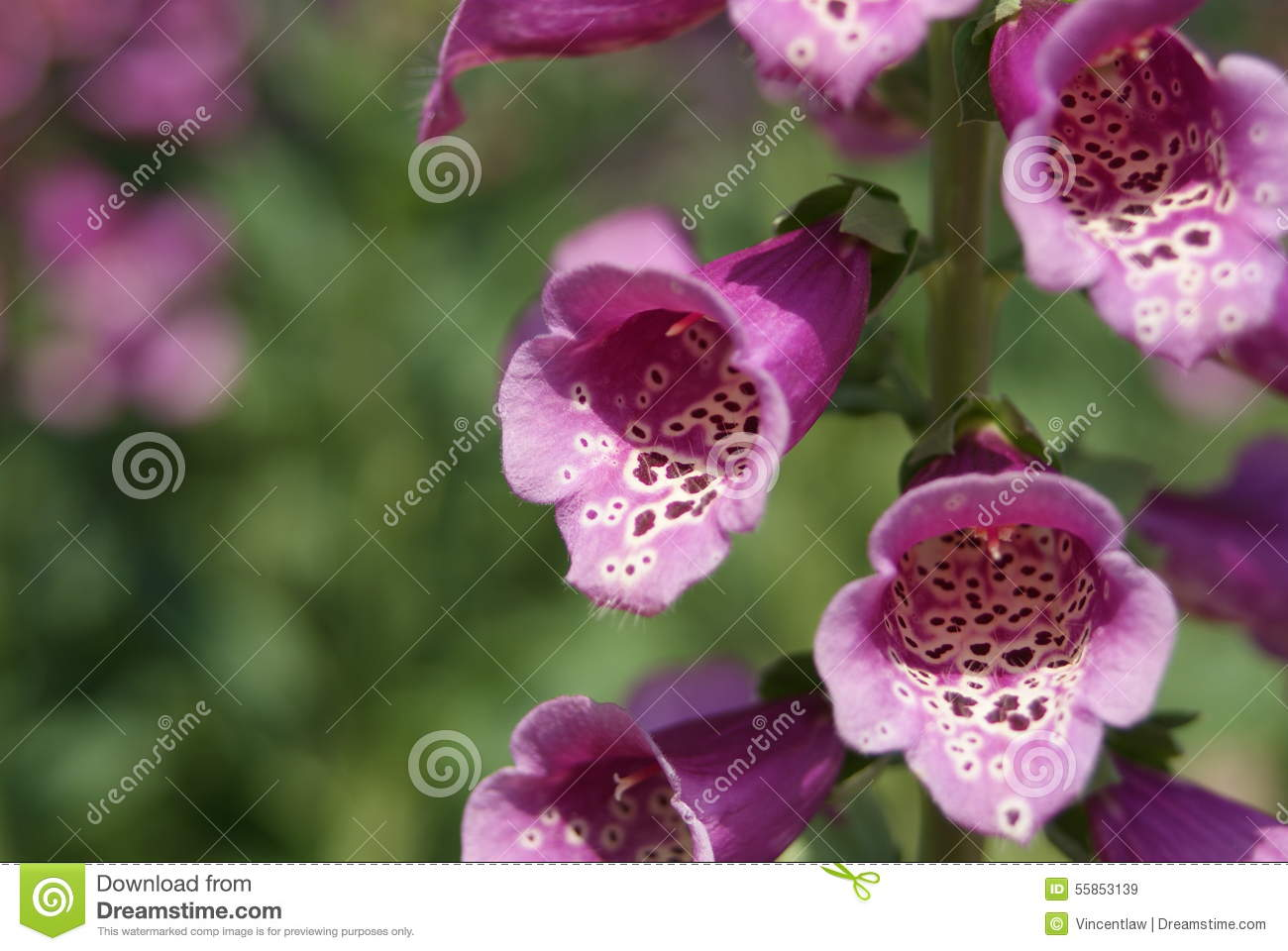Pink bell flowers stock image image of spotted grenen 55853139 pink bell flowers mightylinksfo