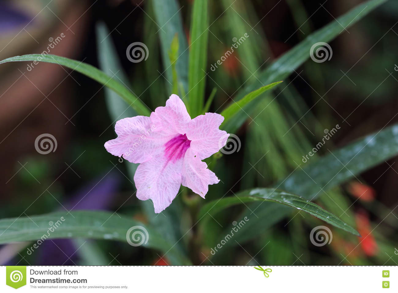Pink Bell Shaped Flower Stock Image Image Of Leaf Green 72759293