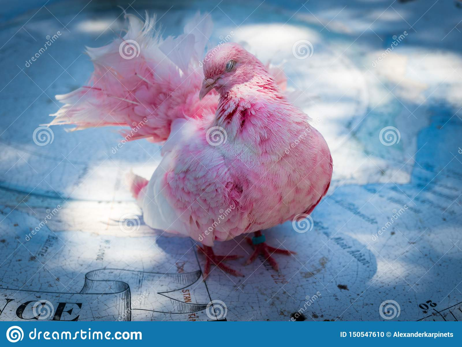 Pink bird dove