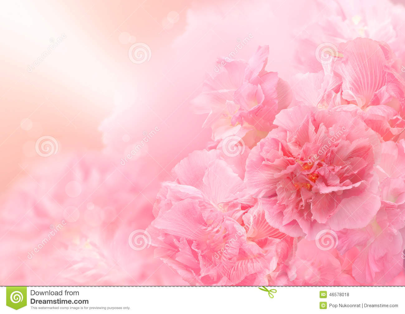 Pink blossom background, Abstract big flower, Beautiful flower
