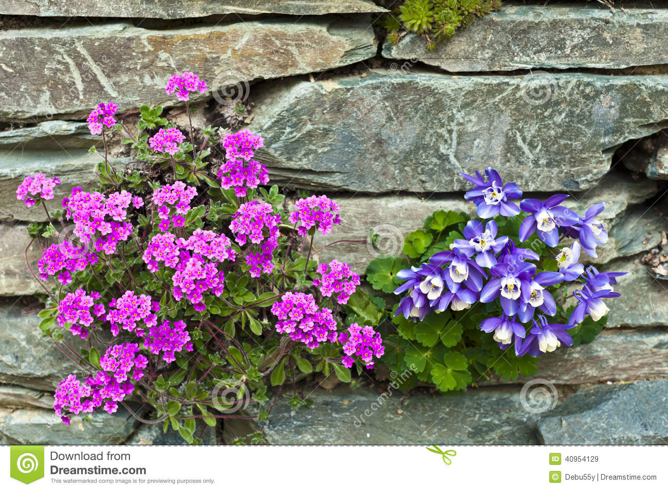 Pink And Blue Alpine Flowers In A Rockery Stock Photo