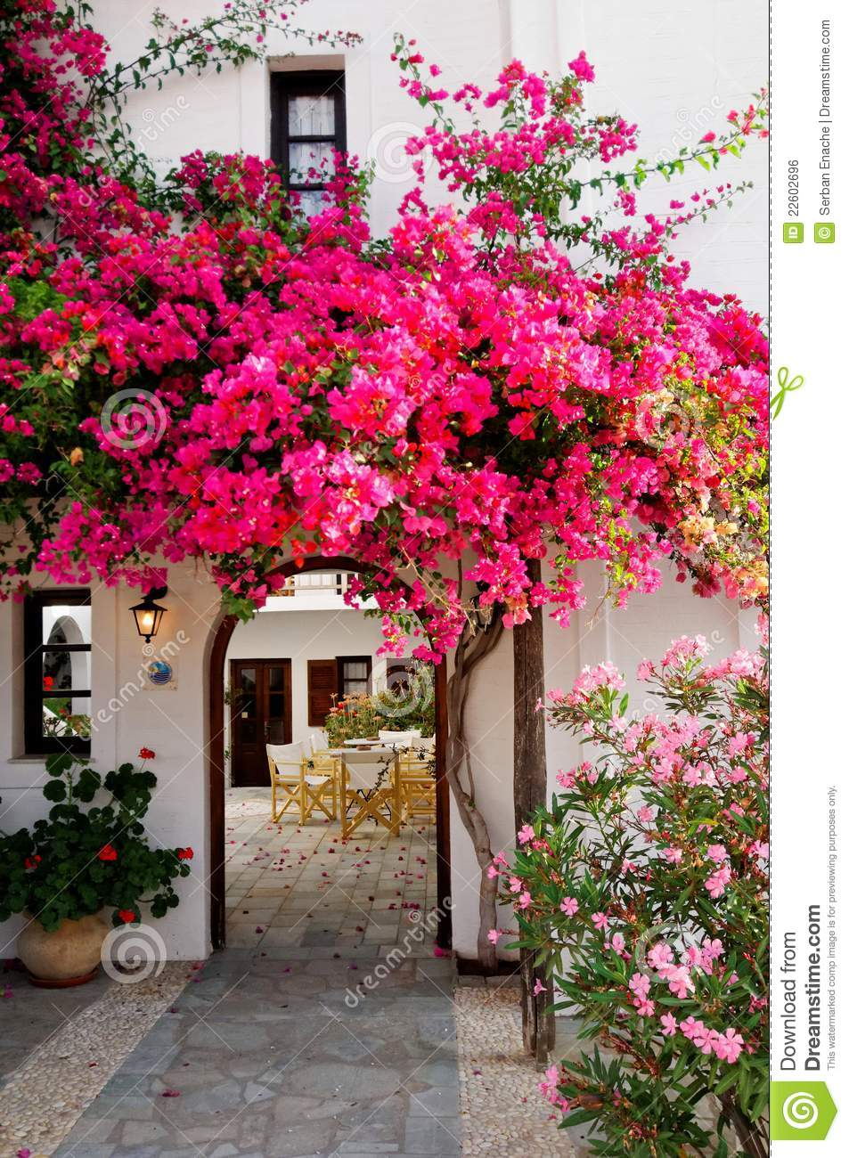 Pink Bougainvillea Royalty Free Stock Image Image 22602696