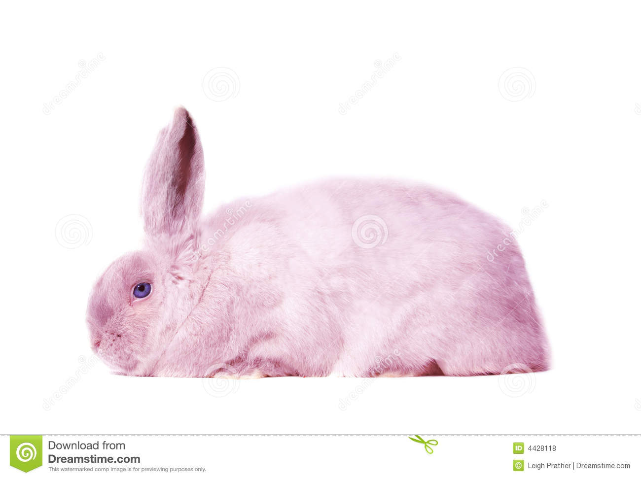 Pink Bunny Rabbit Royalty Free Stock Photos - Image: 4428118