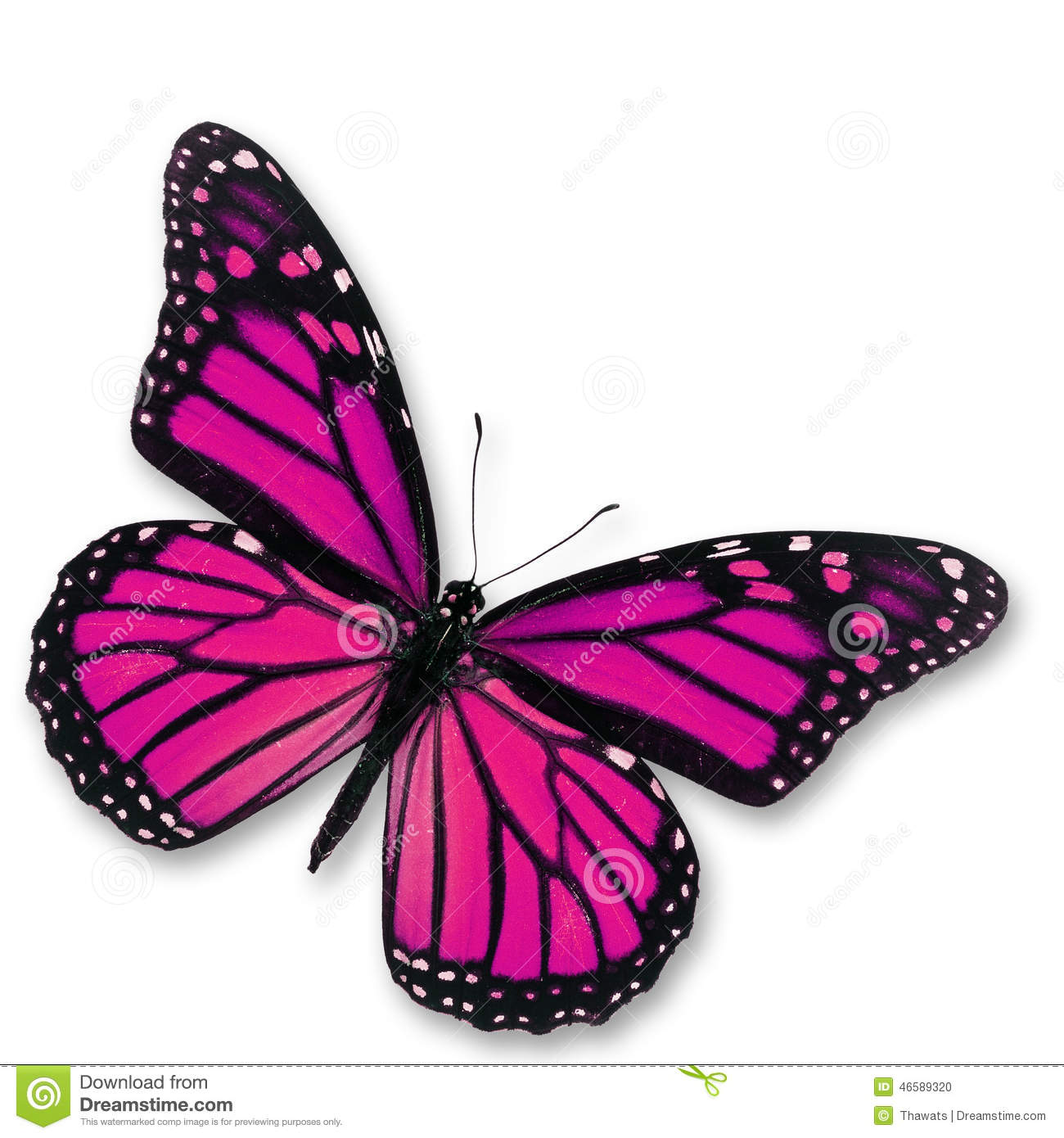 Pink Butterfly Stock P...