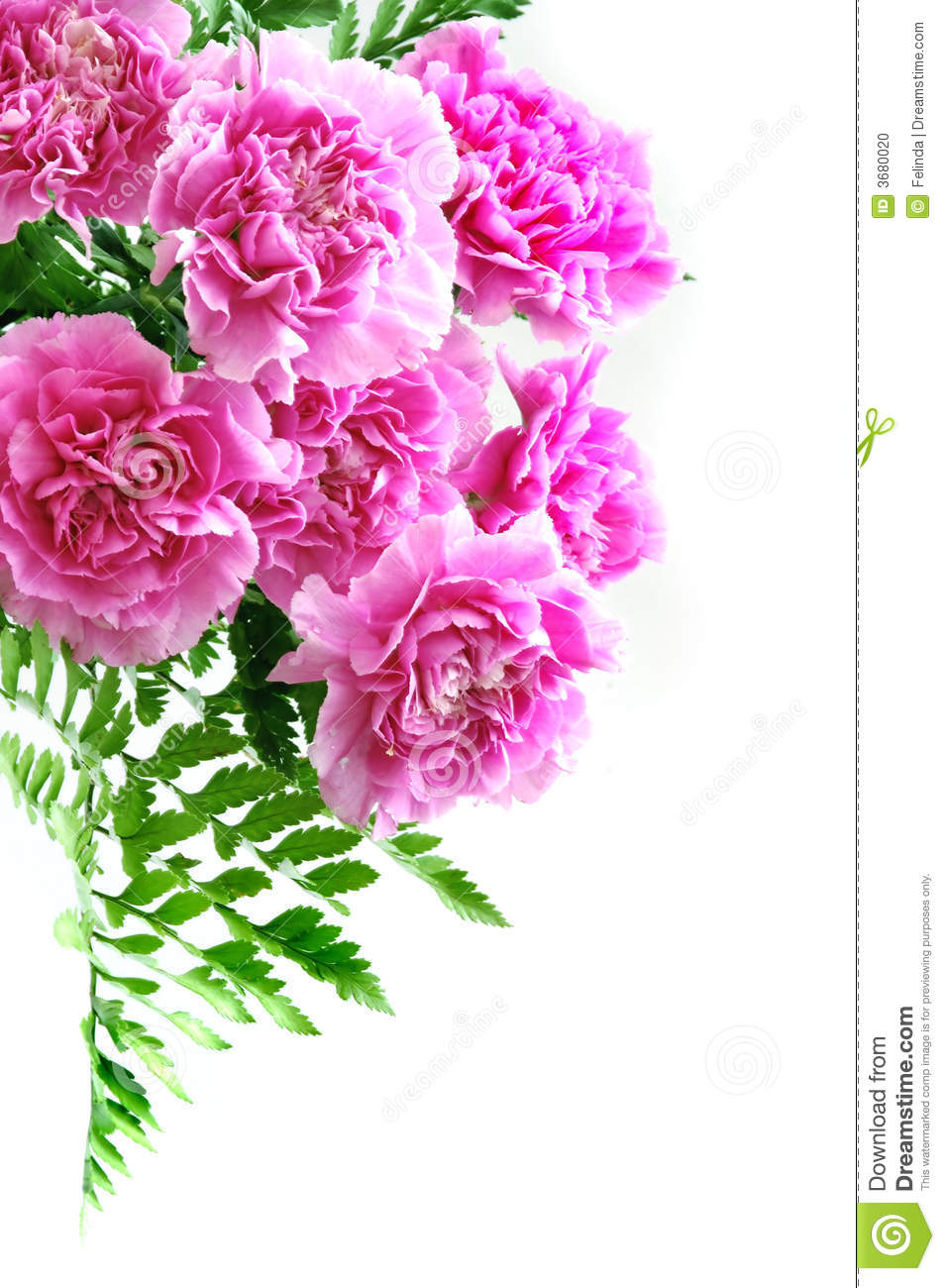 Pink carnation bouquet stock photo image