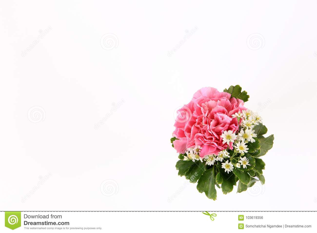 Pink Carnation Flower Wedding Flower On White Background Stock Photo