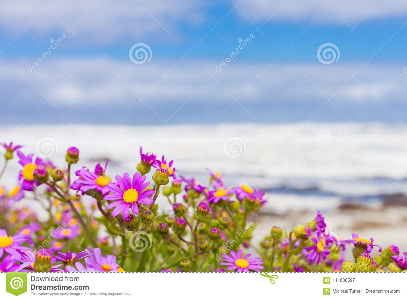 Pink coastal flowers on a beach in cape town south africa stock pink coastal flowers on a beach in cape town south africa royalty free stock photo download pink coastal flowers mightylinksfo