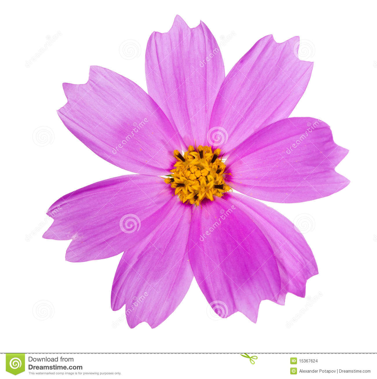 Pink Color Flower With Yellow Center Stock Photo Image Of