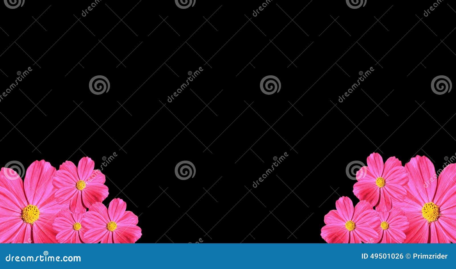 Pink Cosmea Rose. Beautiful Flower Stock Photo - Image ...