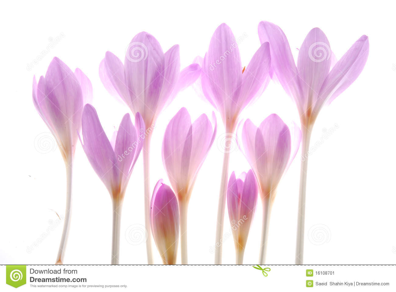 Fall Blooming Crocus- Flower gardens for everyone plant flowers ...