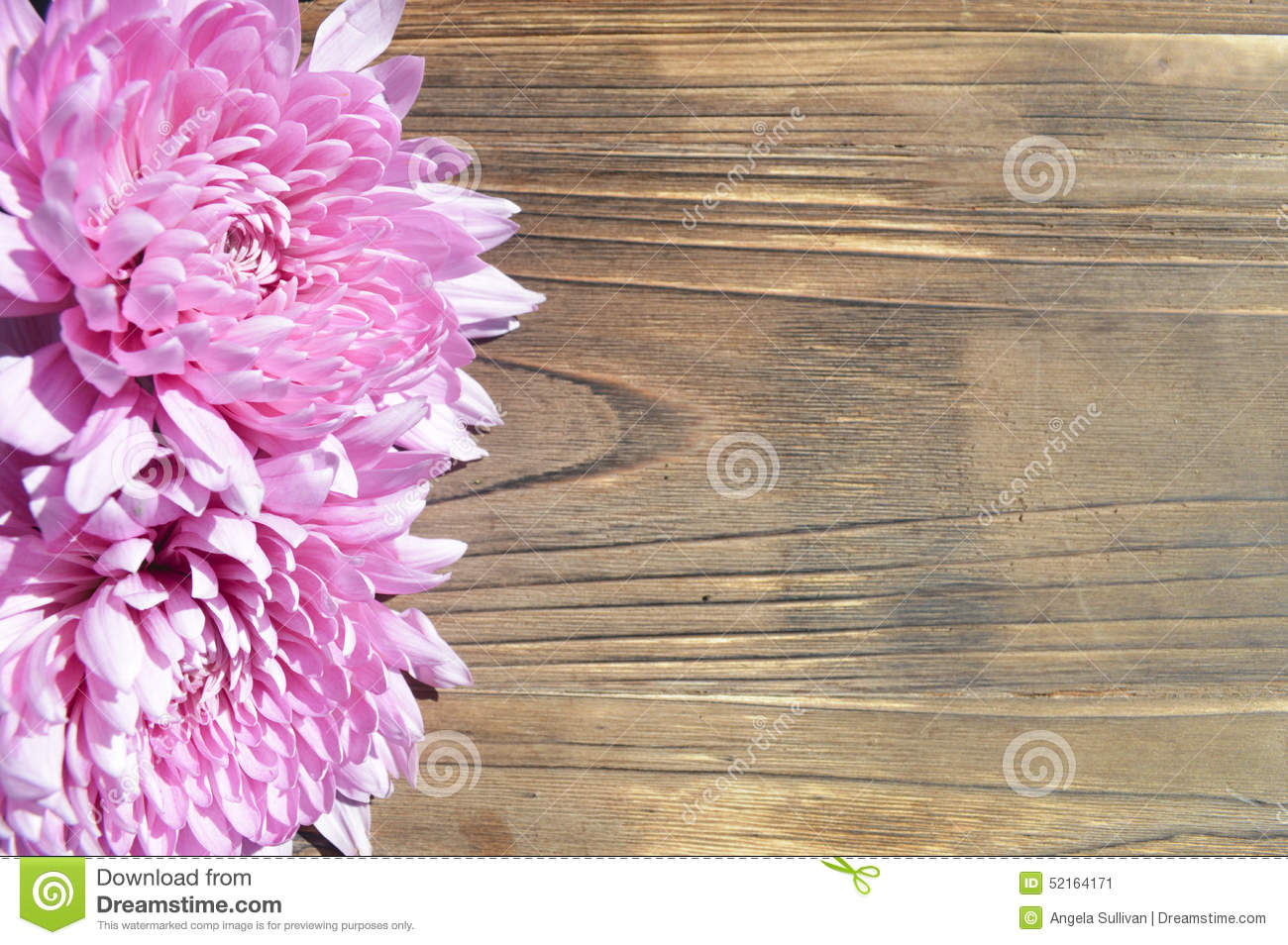 Pink Dahlia Background Rustic Wood Stock Image