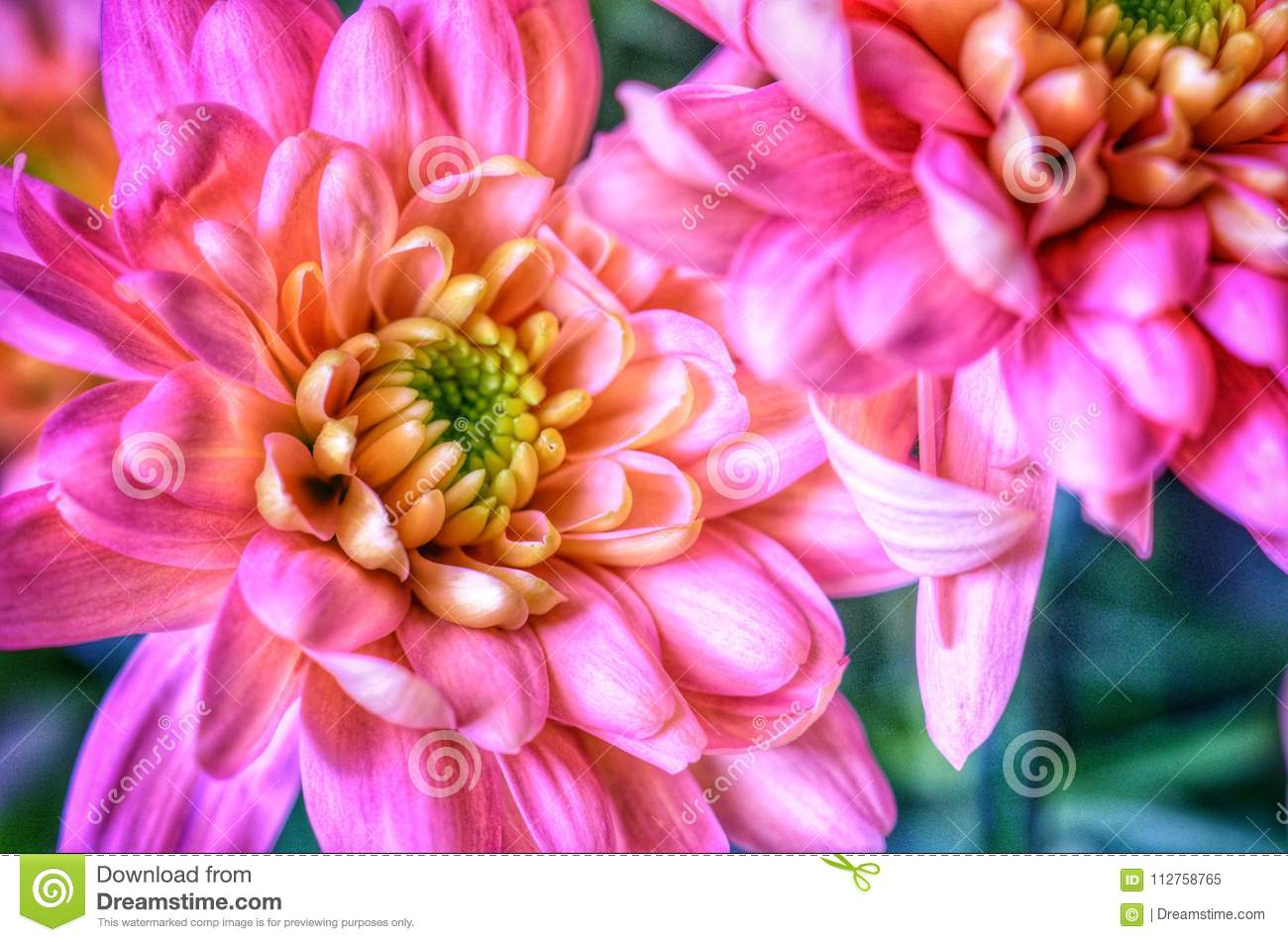 Pink dahlia flowers in art style stock image image of style pink dahlia flowers in art style izmirmasajfo