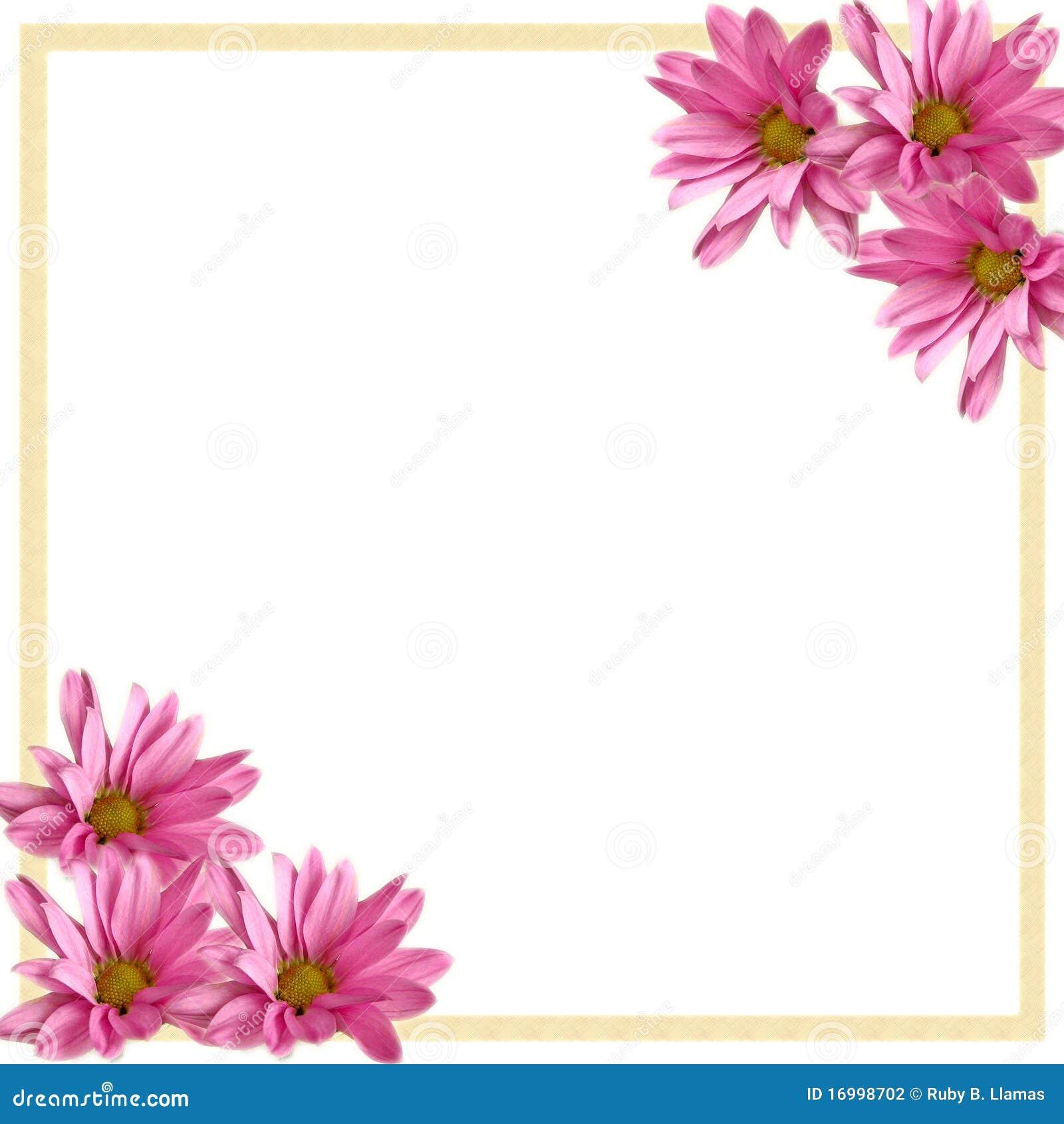 Pink Daisies Corner Border on White