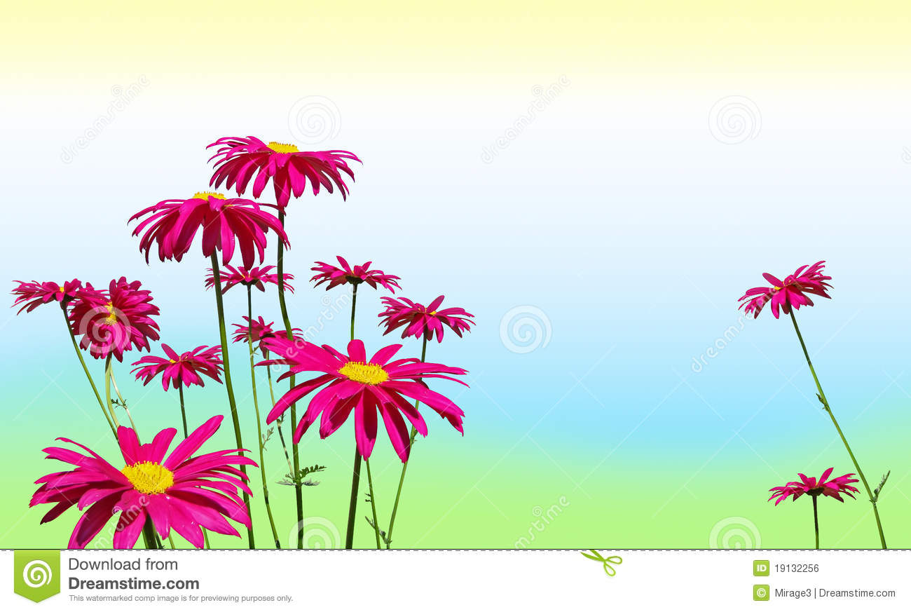 Download image shiny set bely flowers pc android iphone and ipad