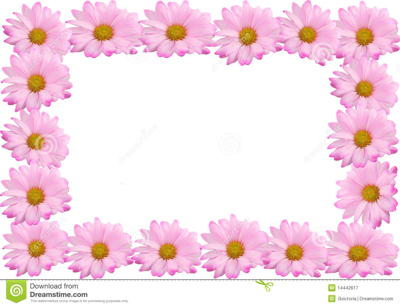Pink daisy frame or border stock image image of flower 14442617 pink daisy frame or border izmirmasajfo