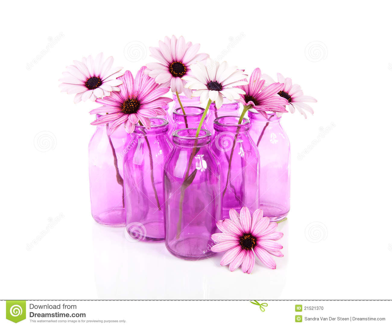 Pink daisy in glass vase stock photo. Image of pink ...