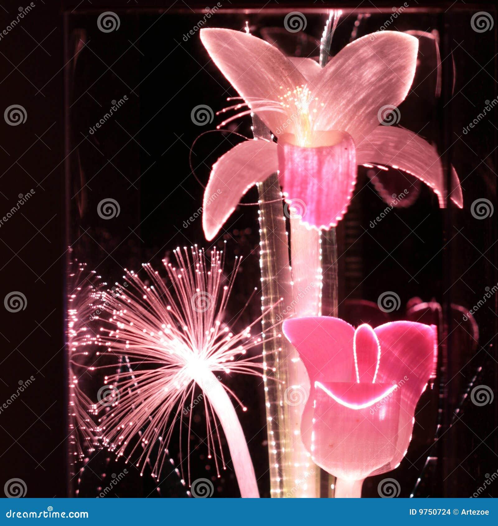Pink Fiber Optic Flowers Stock Photo Image Of Bright
