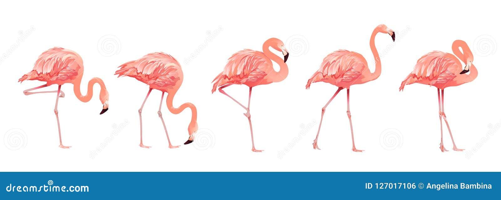 Pink Flamingo Bird Set Tropical Wild Beautiful Exotic Symbol Flat Design Style Isolated on White Background. Vector