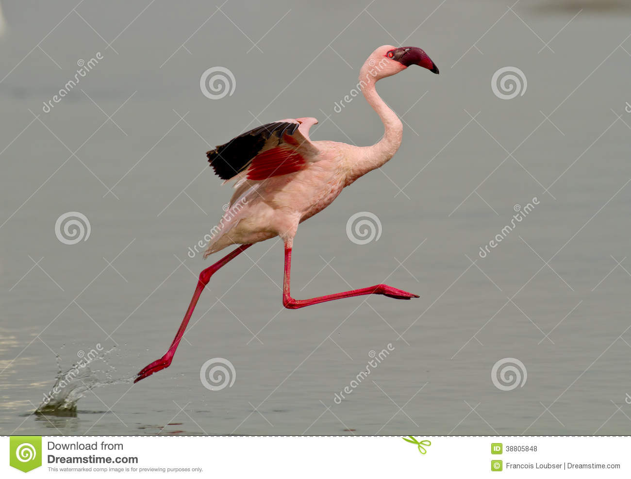 Side view of a pink flamingo bird taking off from the surface of a ... Eagle Silhouette Vector