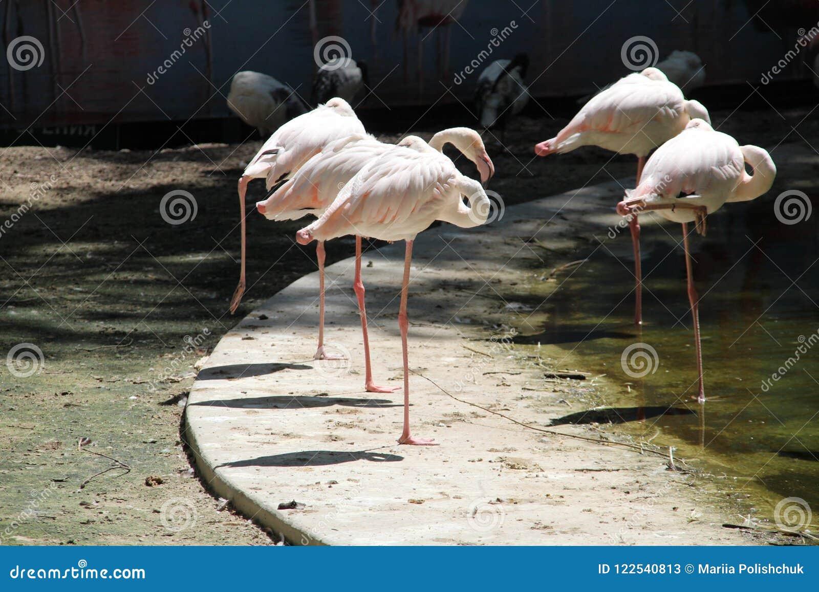 Pink Flamingo Child of the Sunset