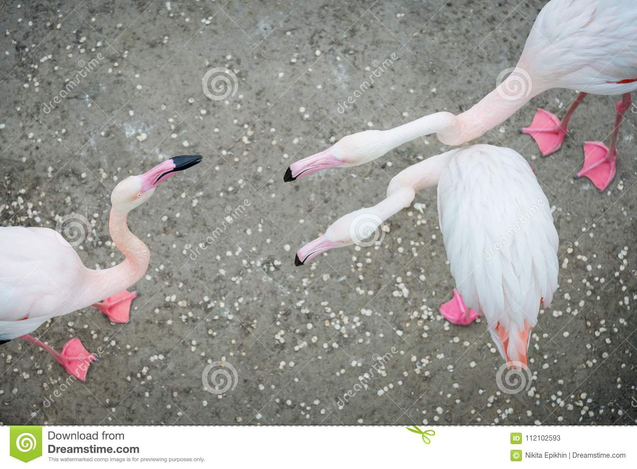 Flamingo Dating