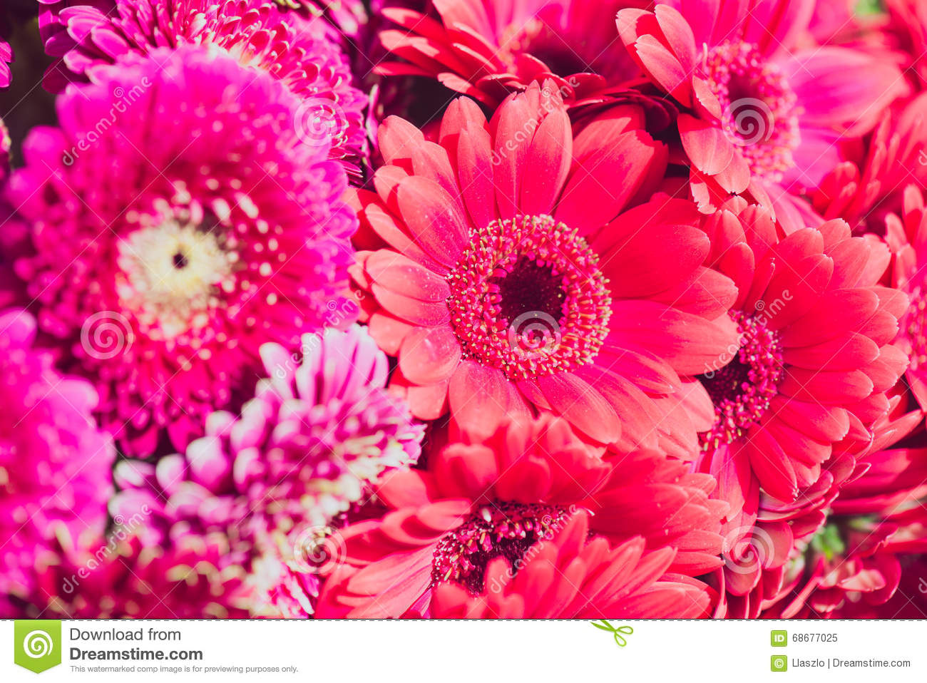 Pink floral wallpaper stock image image of flowers pattern 68677025 download comp mightylinksfo