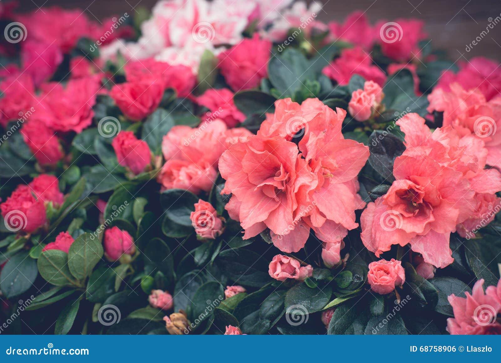 Pink Floral Wallpaper Stock Photo Image Of Dark Close 68758906
