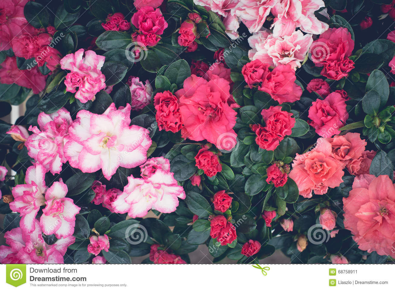 Pink Floral Desktop Background