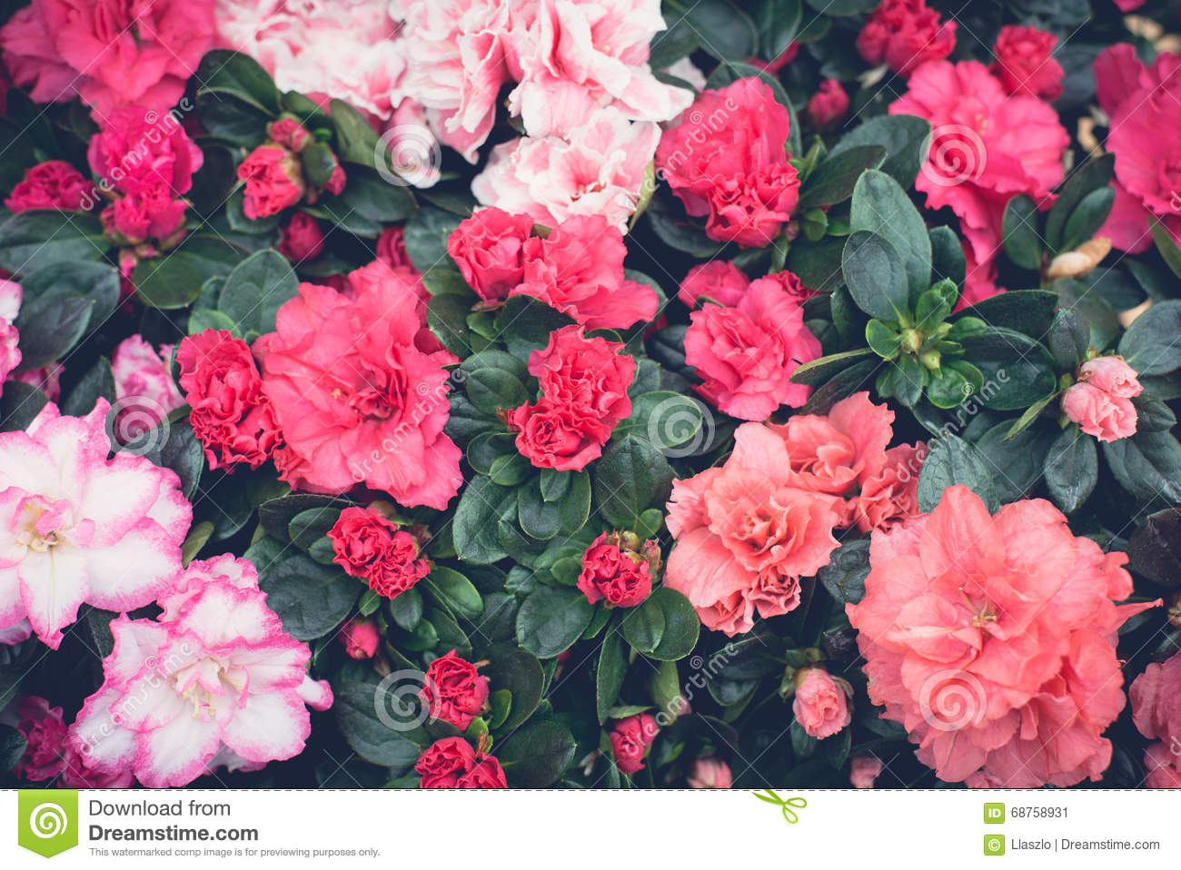 Pink Floral Wallpaper Stock Image Image Of Mixed Pattern 68758931