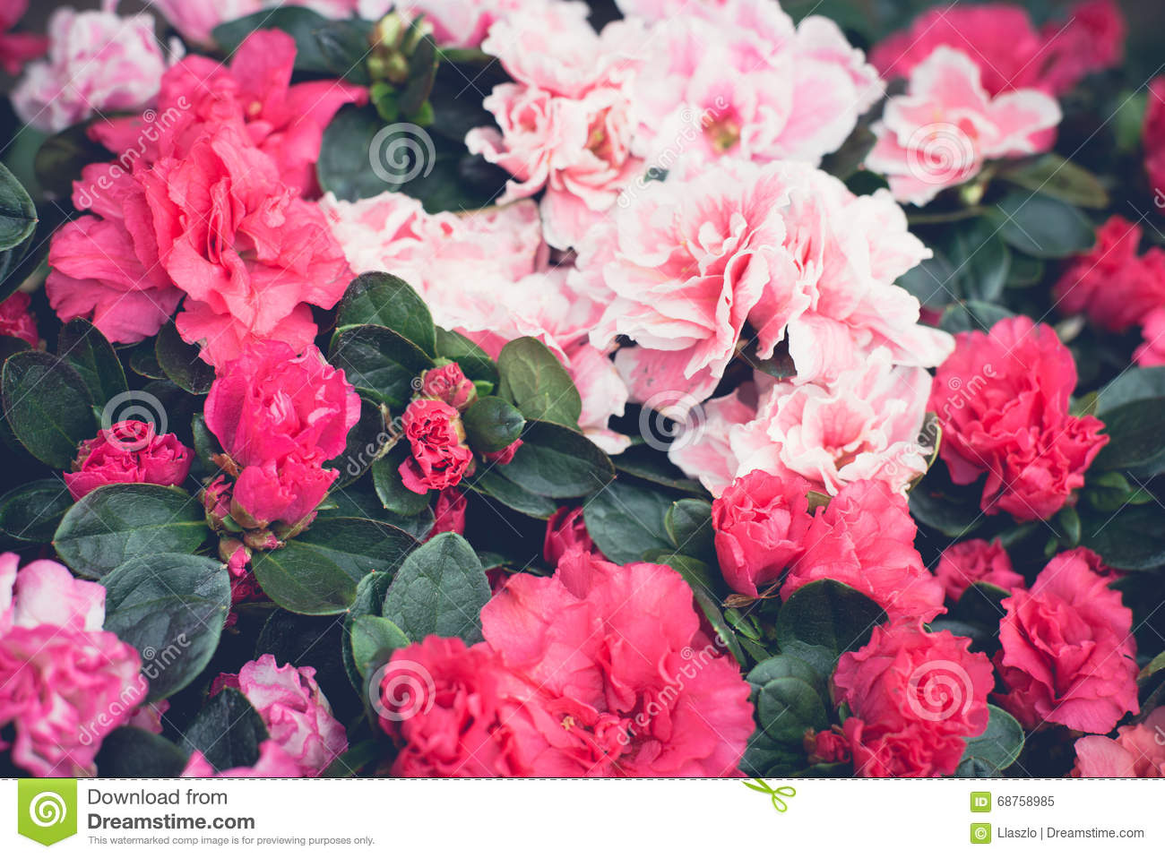 Pink Floral Wallpaper Stock Image Image Of Dark Flowers 68758985