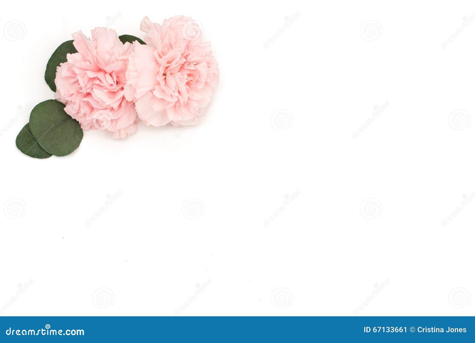 Pink flower and eucalyptus corner flower on white background stock pink flower and eucalyptus corner flower on white background mightylinksfo