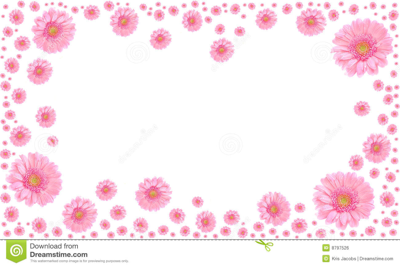 Pink Flower Frame On White Background Stock Photo - Image of ...