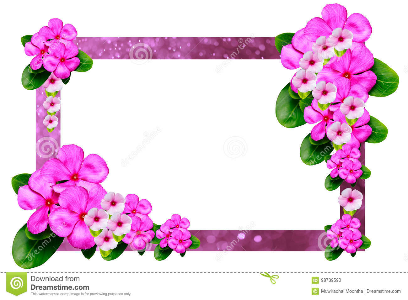 Pink Flower Frame On A White Background Stock Photo - Image of love ...