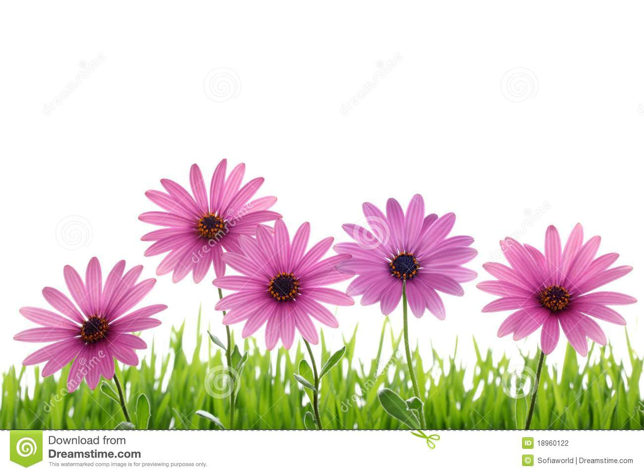Pink Flower In Grass Stock Photo Image Of Environment 18960122