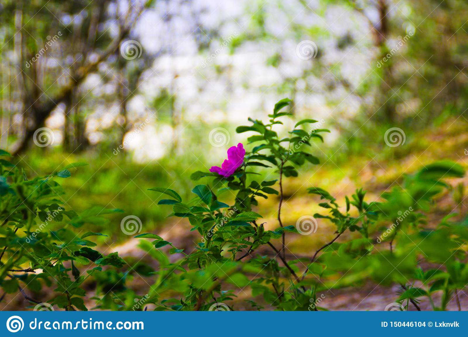 A pink flower on green blurred background