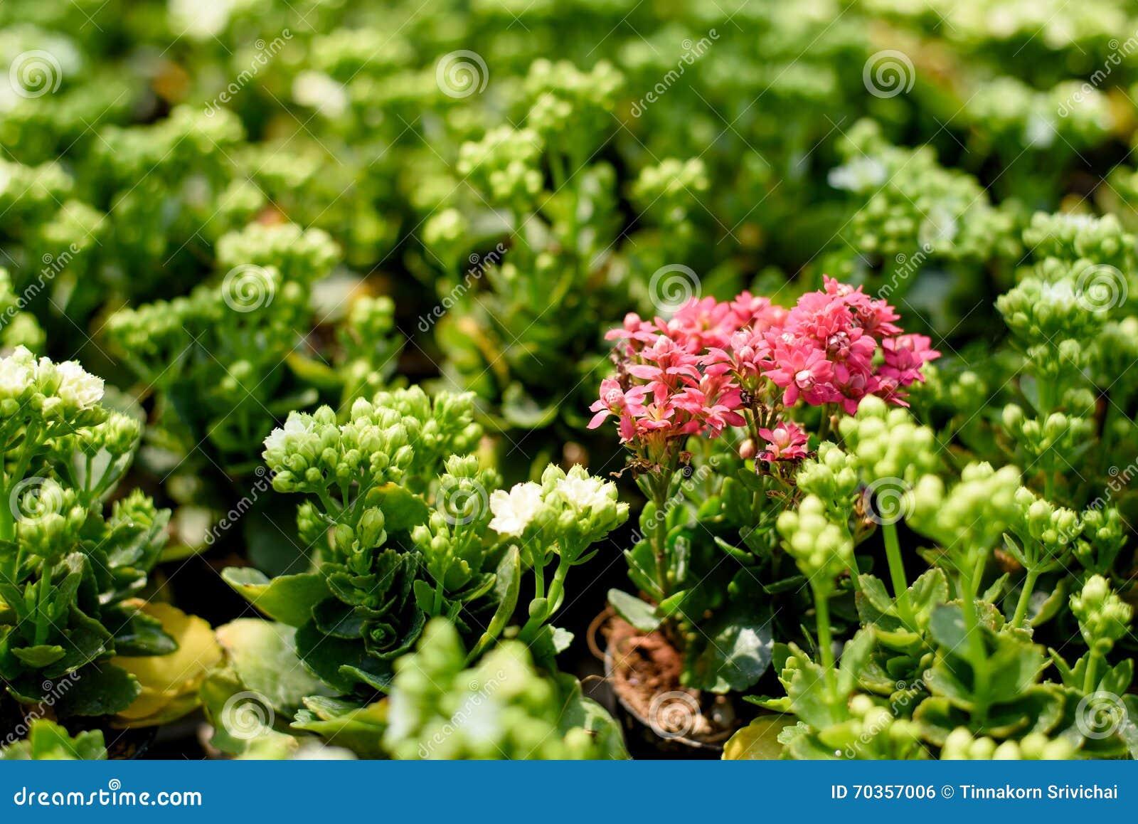 Green plants online shopping